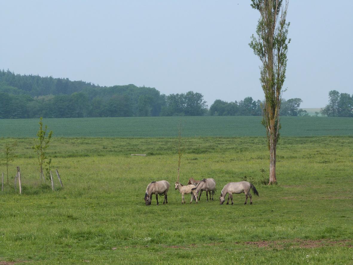 Impression Hutelandschaft Rodachaue (Foto: Philipp Rothe, LEADER-Management RAG Hildburghausen-Sonneberg)