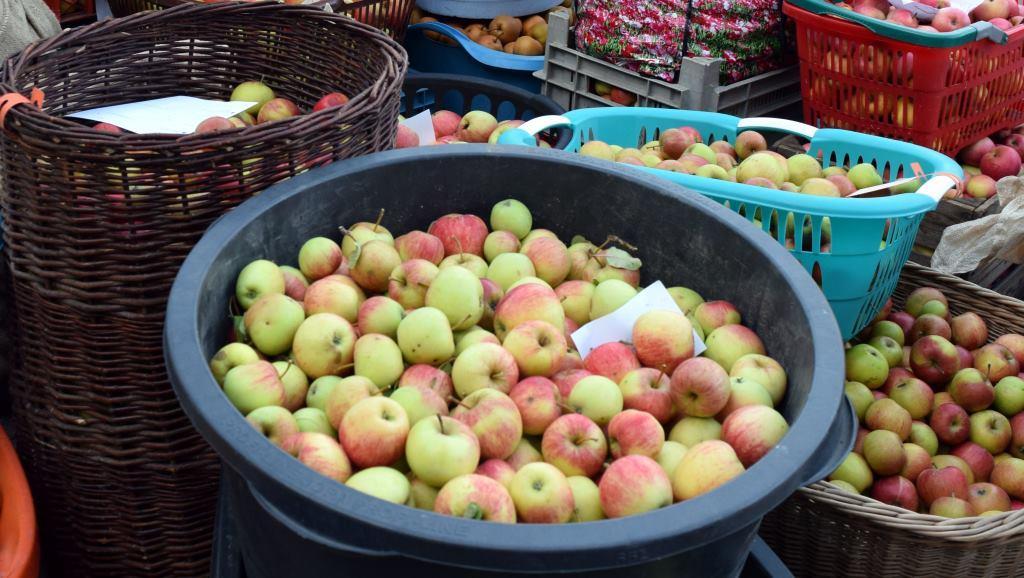 In der neuen Pasteuranlage werden u.a. verschiedene regionale Apfelsorten verarbeitet. (Foto: Birgit Schunk für die RAG Henneberger Land e.V.)