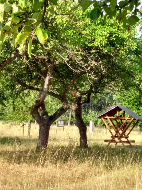 Waldschenke inmitten der Streuobstbäume (Quelle: Christina Hasse)