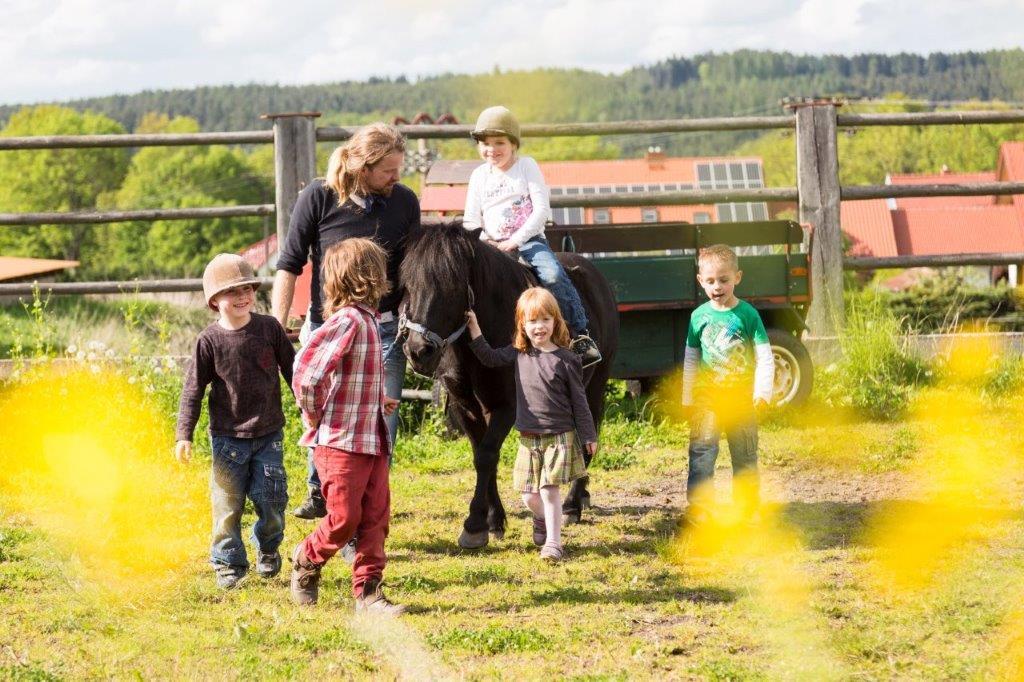 Pferdehof Kindermann Reitgelände (Quelle: René Kindermann)